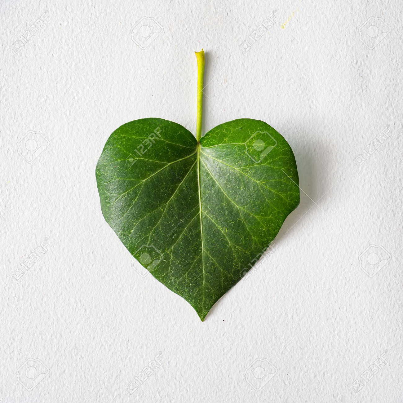 Leaf in shape of a heart. Love valentines or woman's day concept. Natural green leaf on bright background. Flat lay. - 162580140