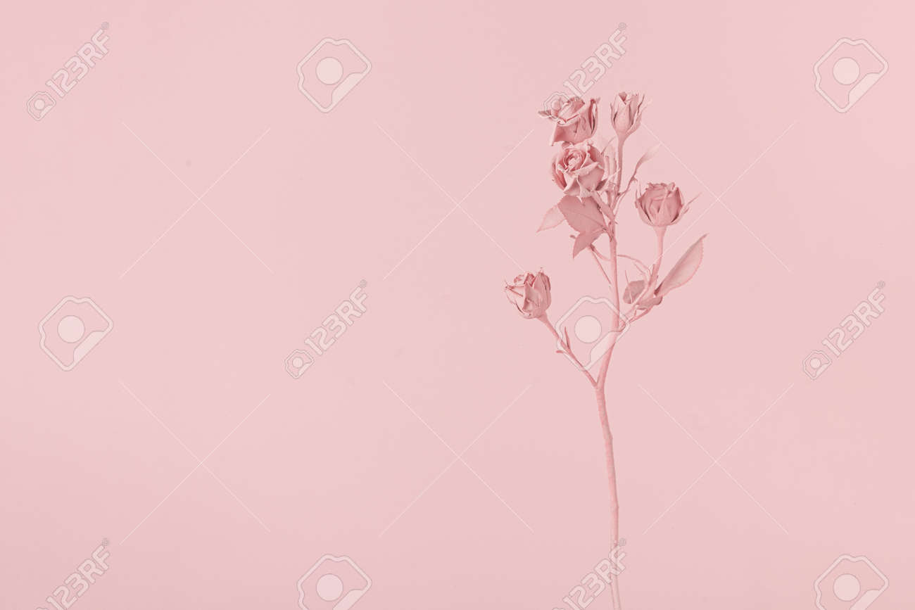 Romantic pink painted rose flower. Minimal nature layout.. Pink natural background concept. - 163345240