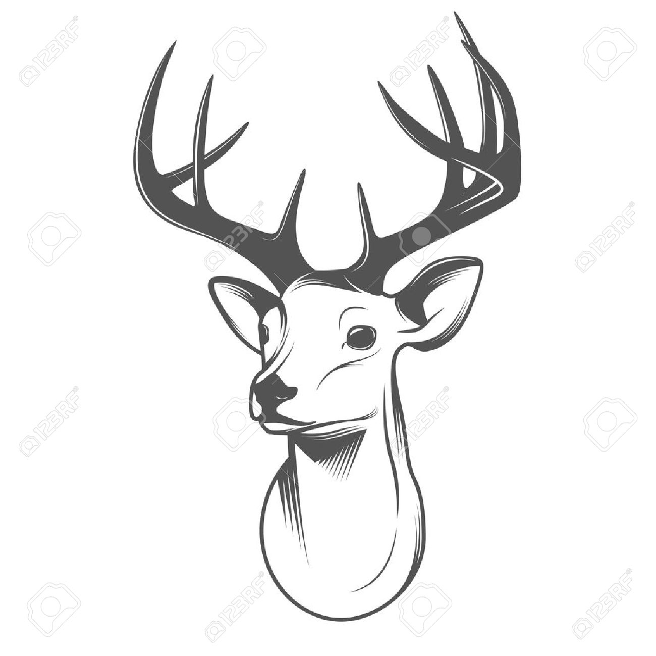 Deer head isolated on white background - 19457203