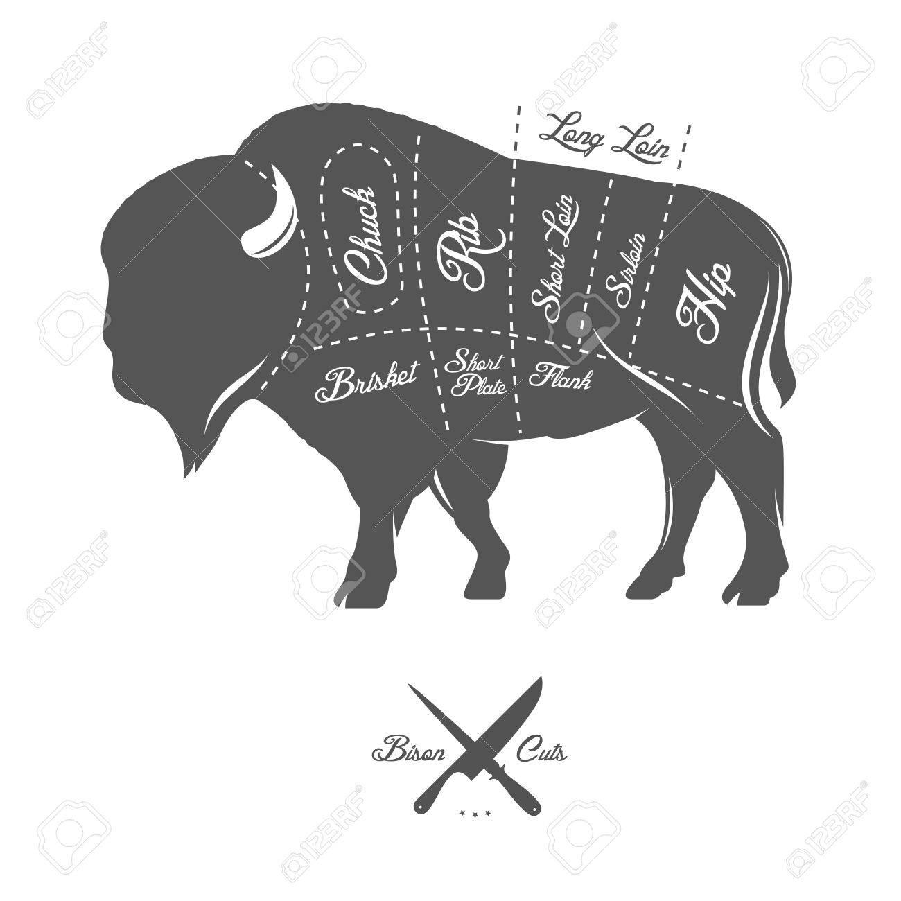 Vintage Butcher Cuts Of Bison Buffalo Scheme Diagram Royalty Free ...