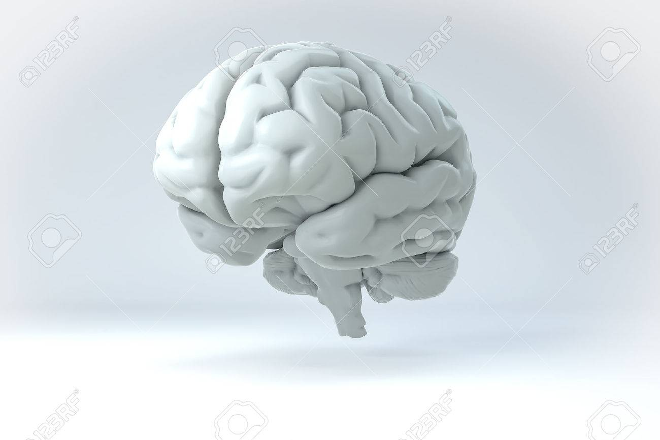 isolated 3d human brain illustration science anatomy background