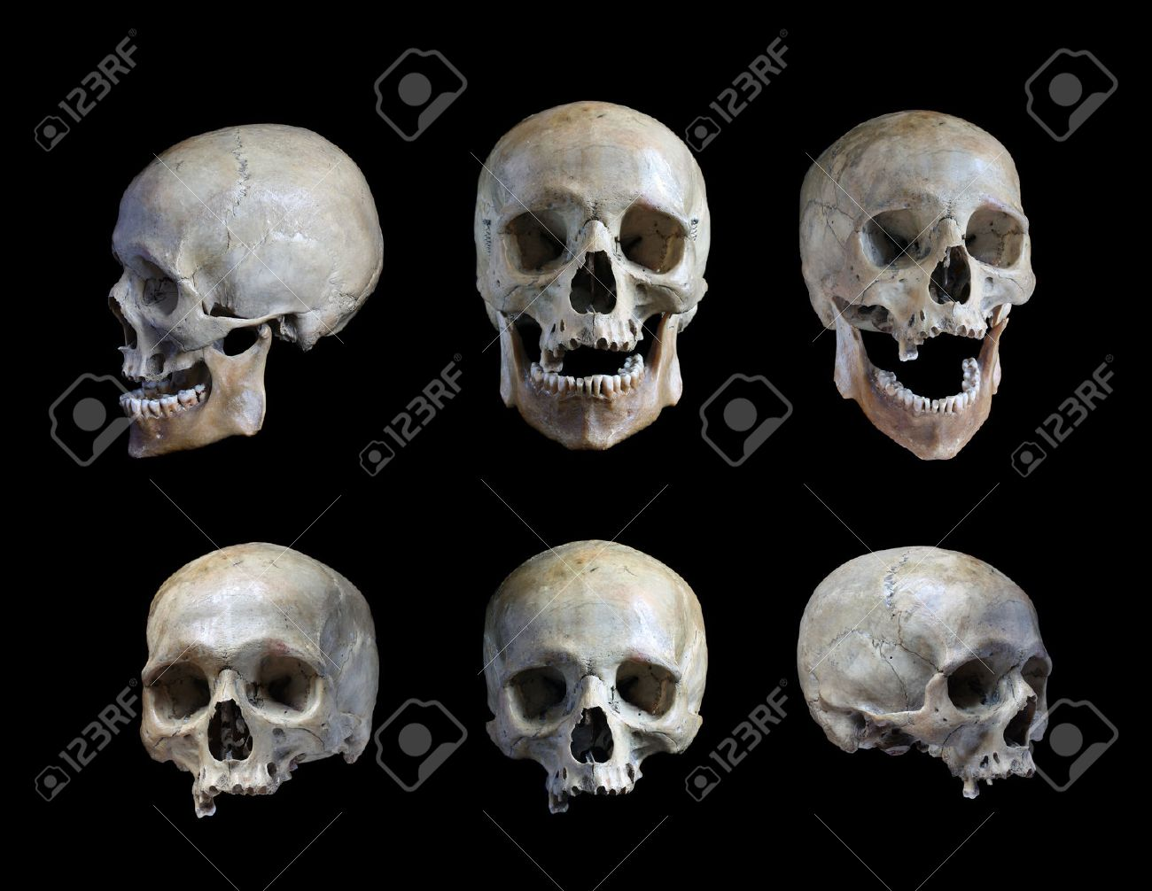 the best attitude e1021 4729d Skull of the person on a black background Stock Photo - 65828697