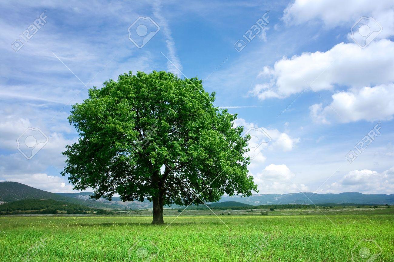 Tree on green field - 19364439