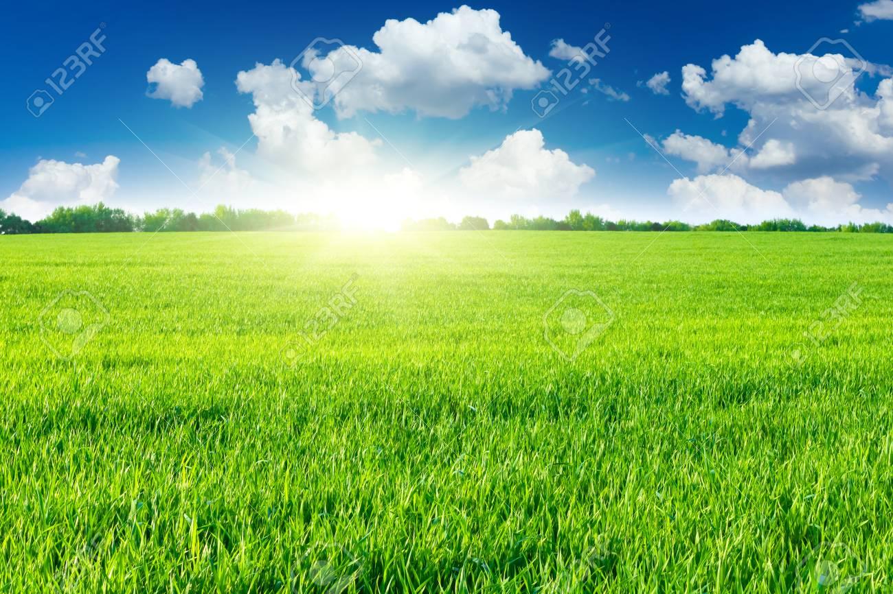 Green field - 27353361