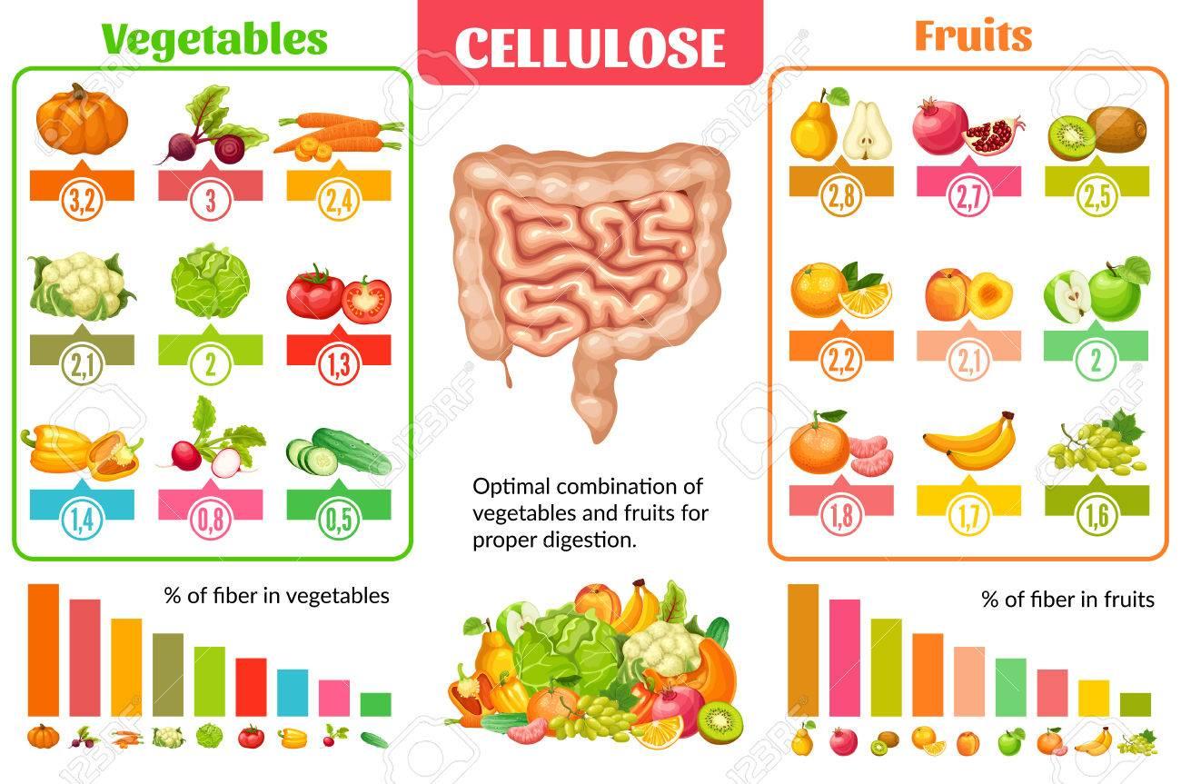 Dibujos Animados Nutrición Saludable Concepto Infográfico Con Un Conjunto De Verduras Y Frutas Naturales Para La Correcta Digestión Ilustración