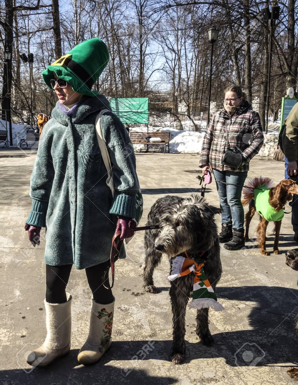 Moscow Russia March 24 2018 Irish Wolfhound With Owner Stock
