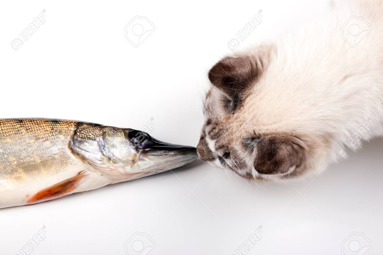 curious young cat playing with a freshly caught fish - 22135910