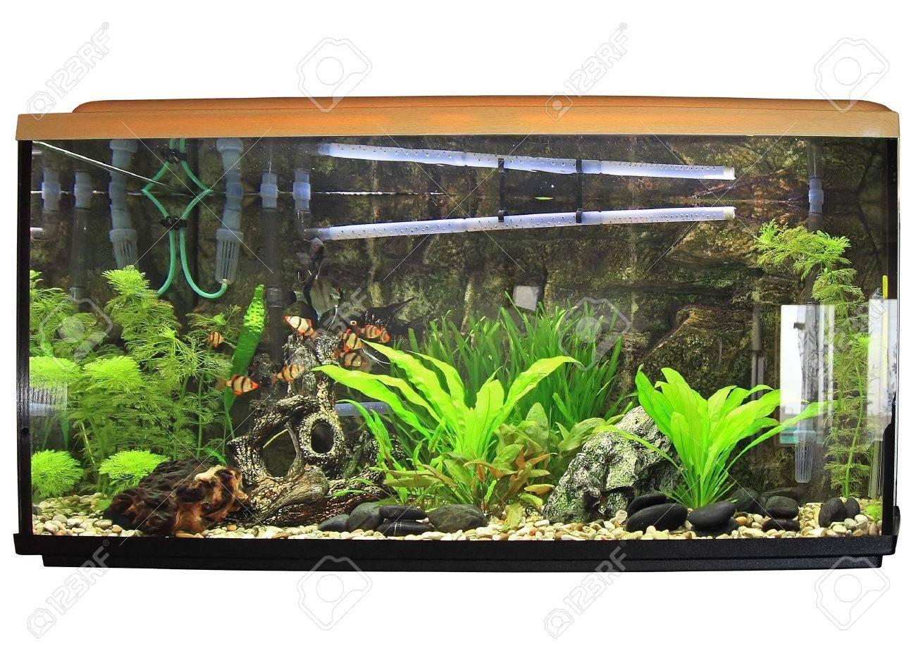 Freshwater aquarium fish ecosystem - Beautiful Aquarium Isolated Over White Stock Photo 10397326