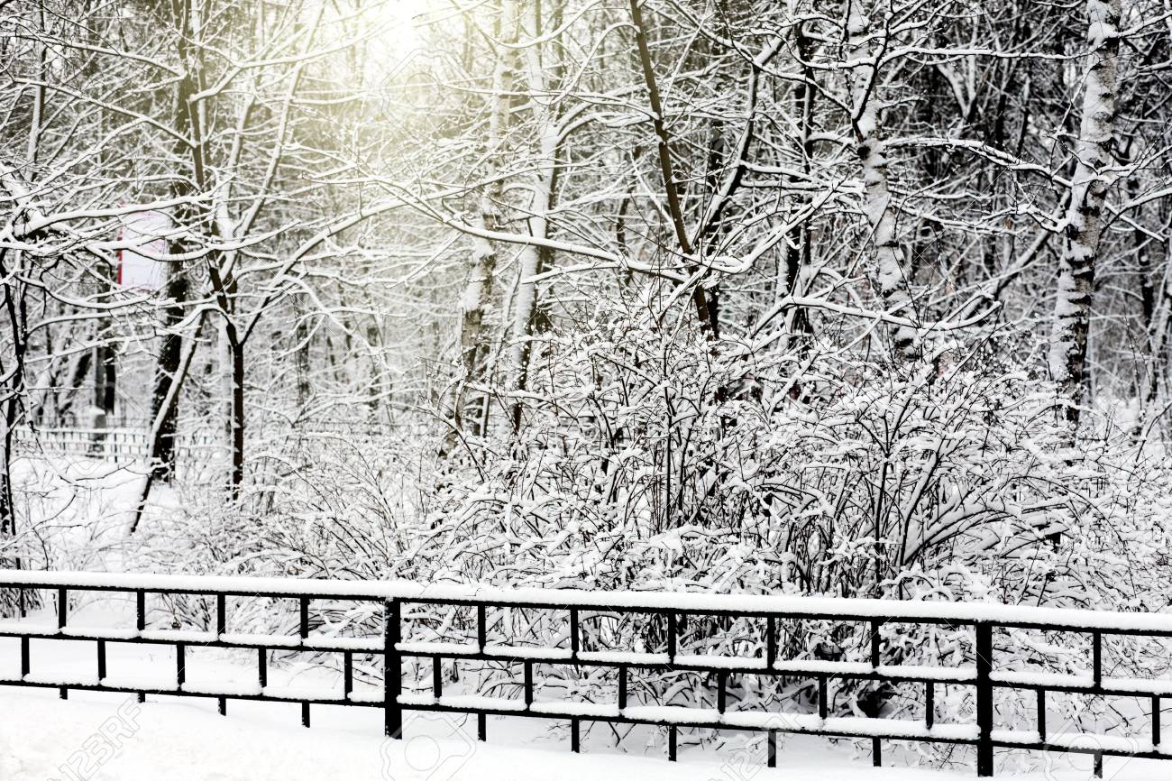 Silent snow-covered urban park in winter. Russia Stock Photo - 12989543
