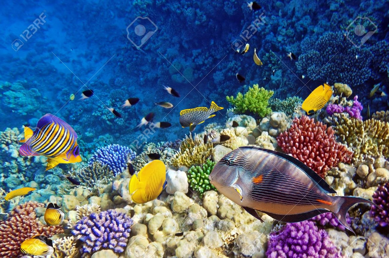 Coral and fish in the Red Sea Egypt Stock Photo - 15356685