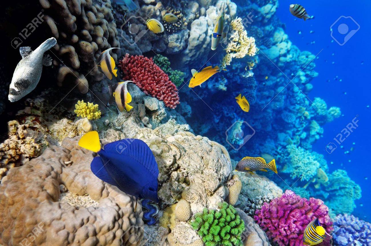 Coral and fish in the Red Sea.Egypt Stock Photo - 15642964