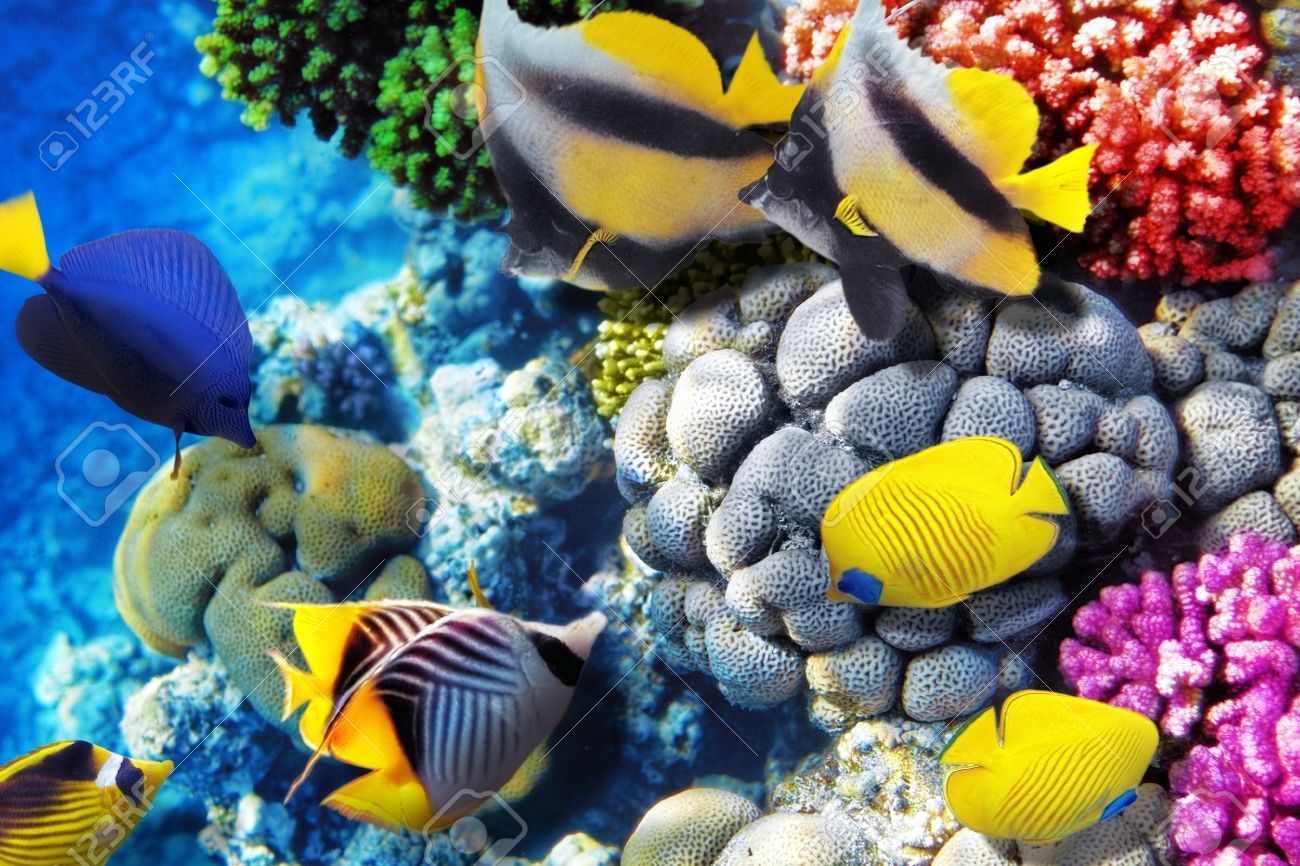 Coral and fish in the Red Sea. Egypt, Africa Stock Photo - 17413868