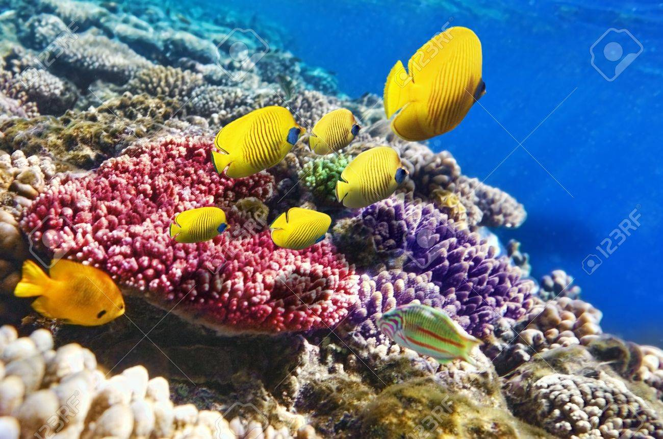 Coral and fish in the Red Sea  Egypt, Africa Stock Photo - 17967904