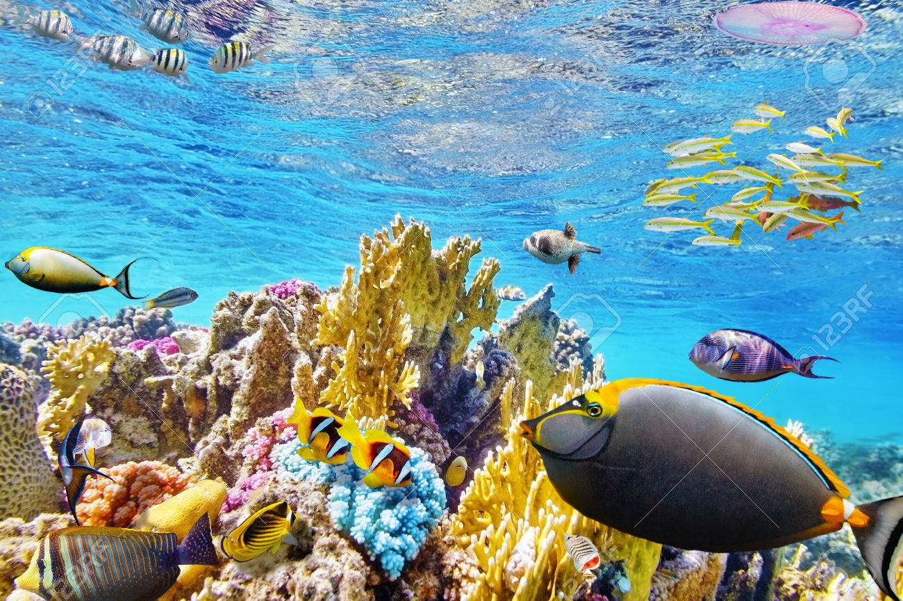Wonderful And Beautiful Underwater World With Corals Tropical Stock Photo Picture Royalty Free Image 37888456