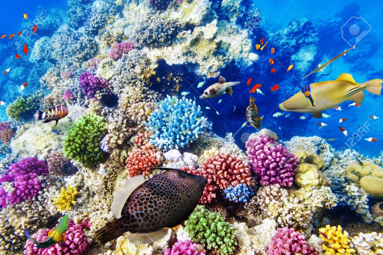 Wonderful And Beautiful Underwater World With Corals Tropical Stock Photo Picture Royalty Free Image 37887099