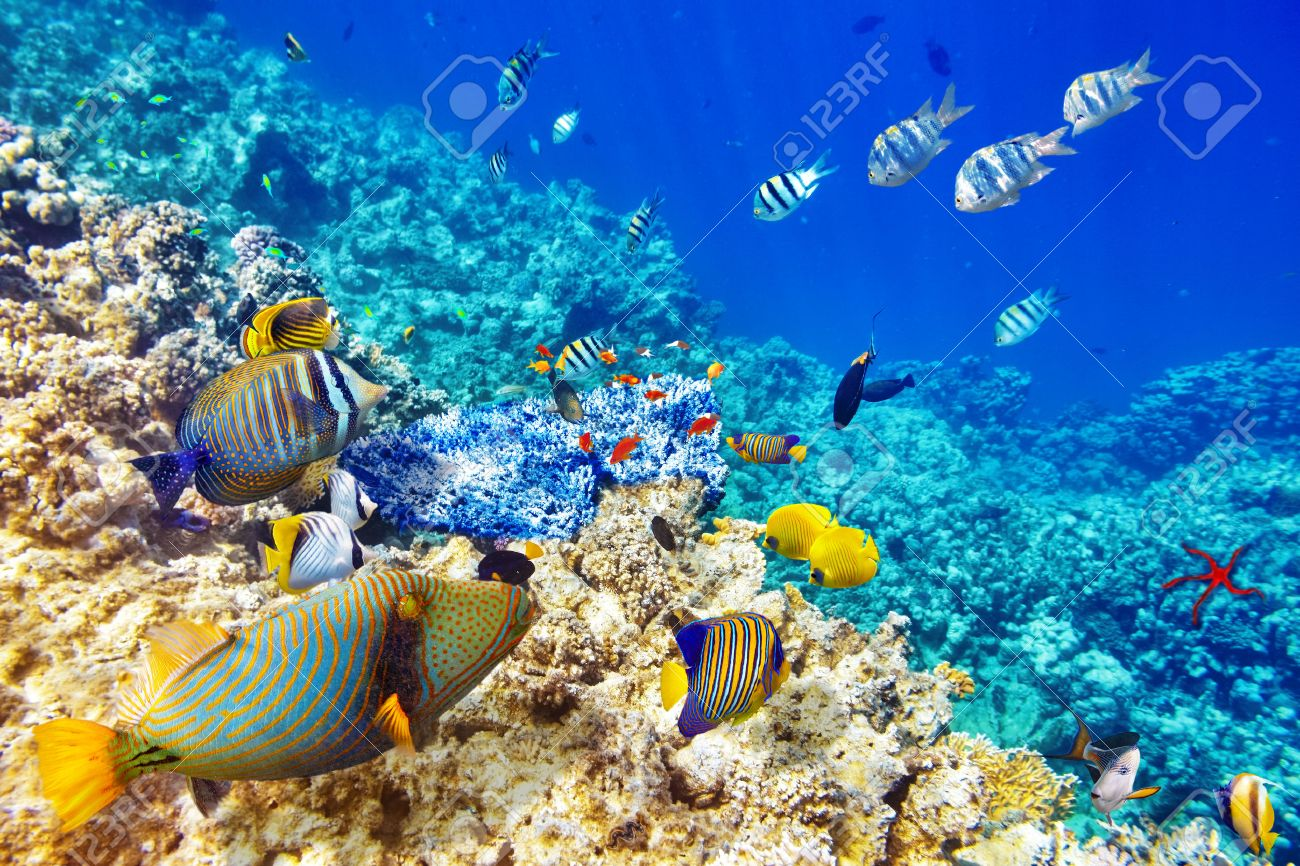 Wonderful And Beautiful Underwater World With Corals Tropical Stock Photo Picture Royalty Free Image 38718250