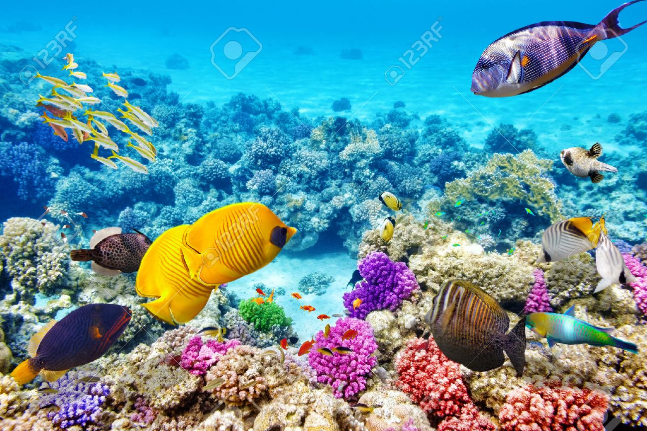 Wonderful And Beautiful Underwater World With Corals Tropical Stock Photo Picture Royalty Free Image 38718355
