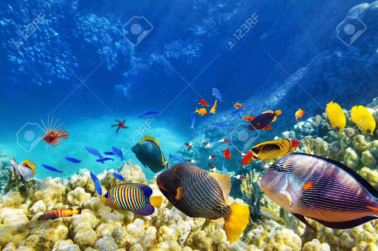 Wonderful And Beautiful Underwater World With Corals Tropical