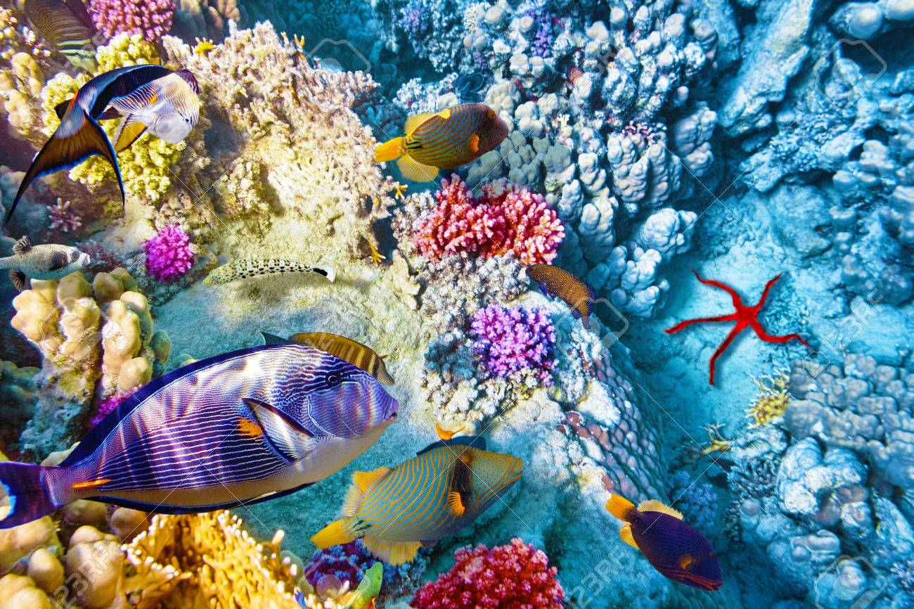 Wonderful And Beautiful Underwater World With Corals Tropical Stock Photo Picture Royalty Free Image 40613783