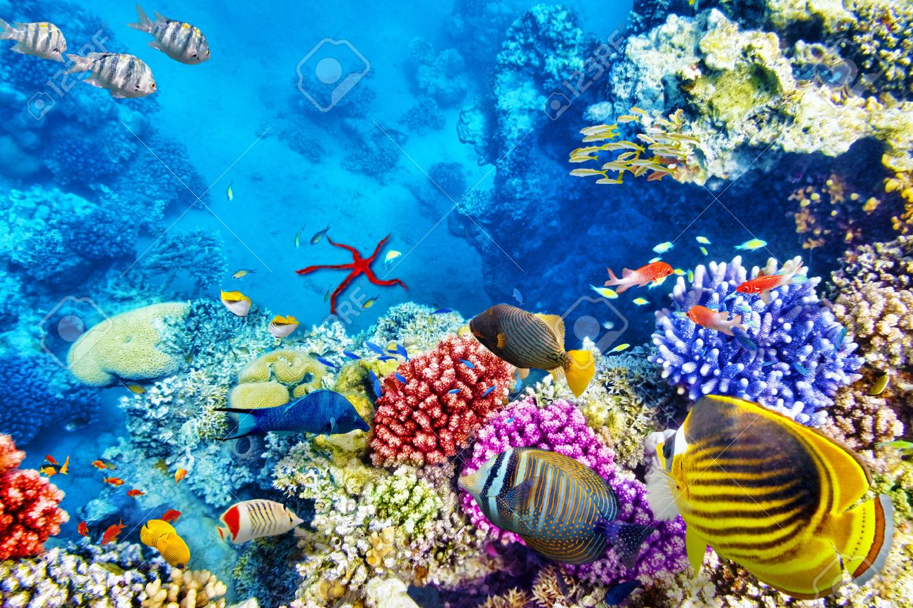 Wonderful And Beautiful Underwater World With Corals Tropical Stock Photo Picture Royalty Free Image 40613790