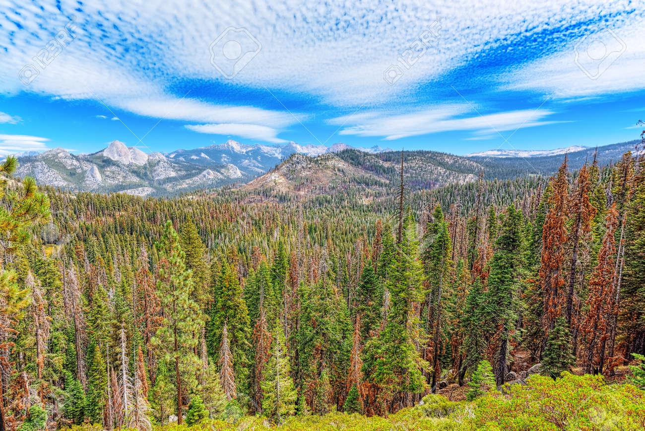 Magnificent national American natural park - Yosemite. California. USA. - 122334050
