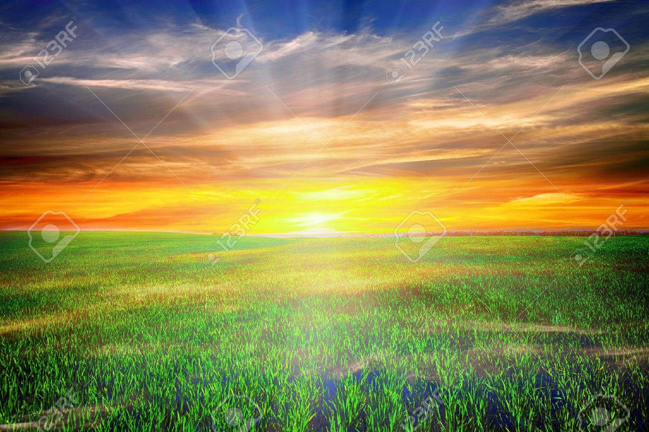 Beatiful morning green field with blue heaven - 37470017