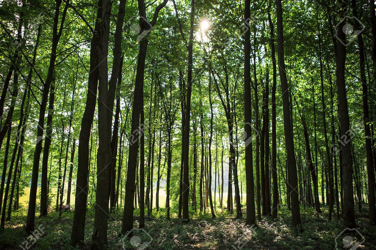 beautiful green forest - 37661047