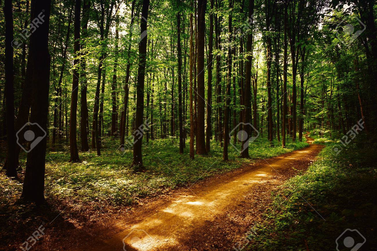 beautiful green forest - 37767031