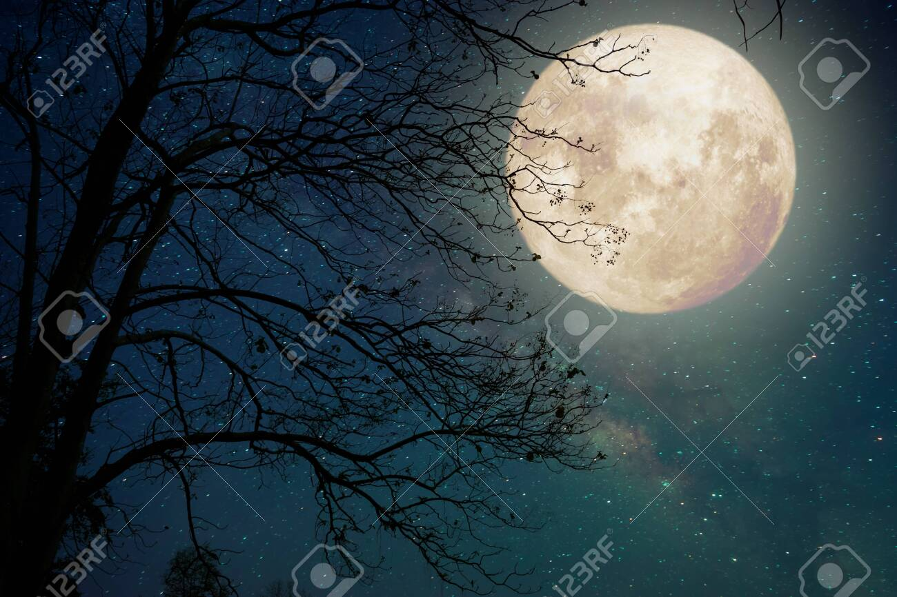 Milky Way star in night sky full moon and old tree - Retro style artwork with vintage color tone - 135641707