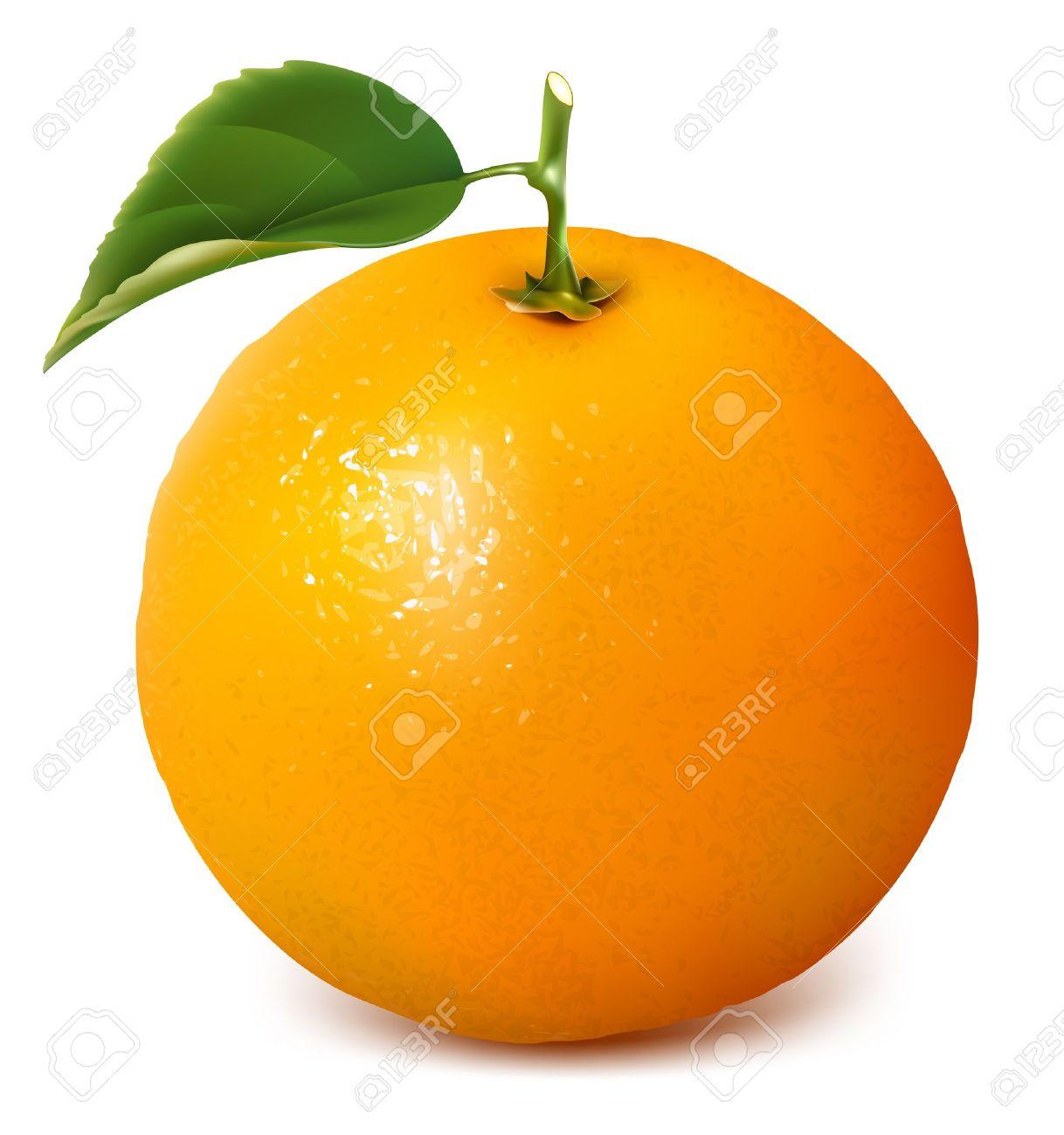Vector fresh ripe orange with leaf. Stock Vector - 9900137