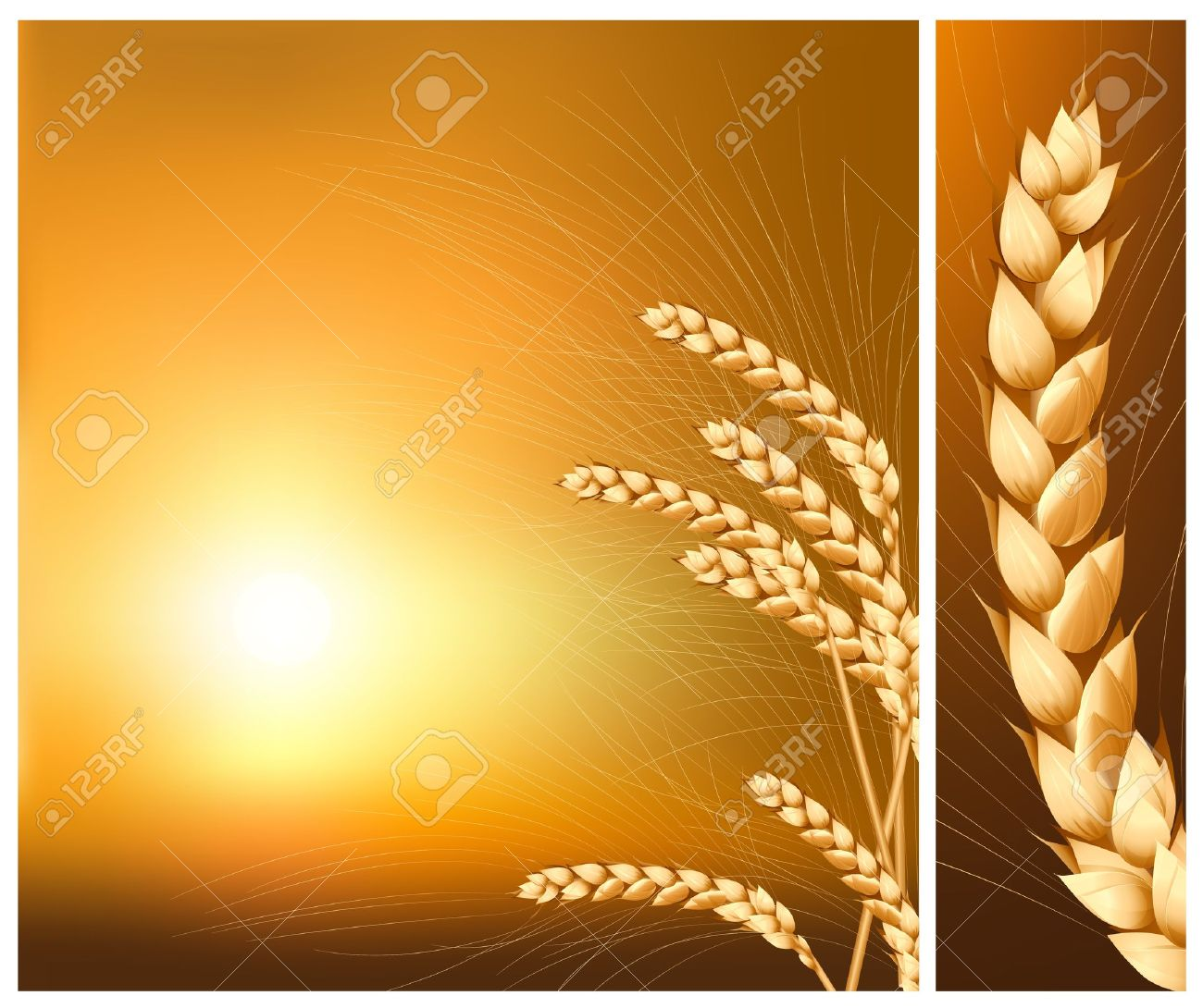 Vector. Ears of wheat on the  rising sun background. Stock Vector - 10053488