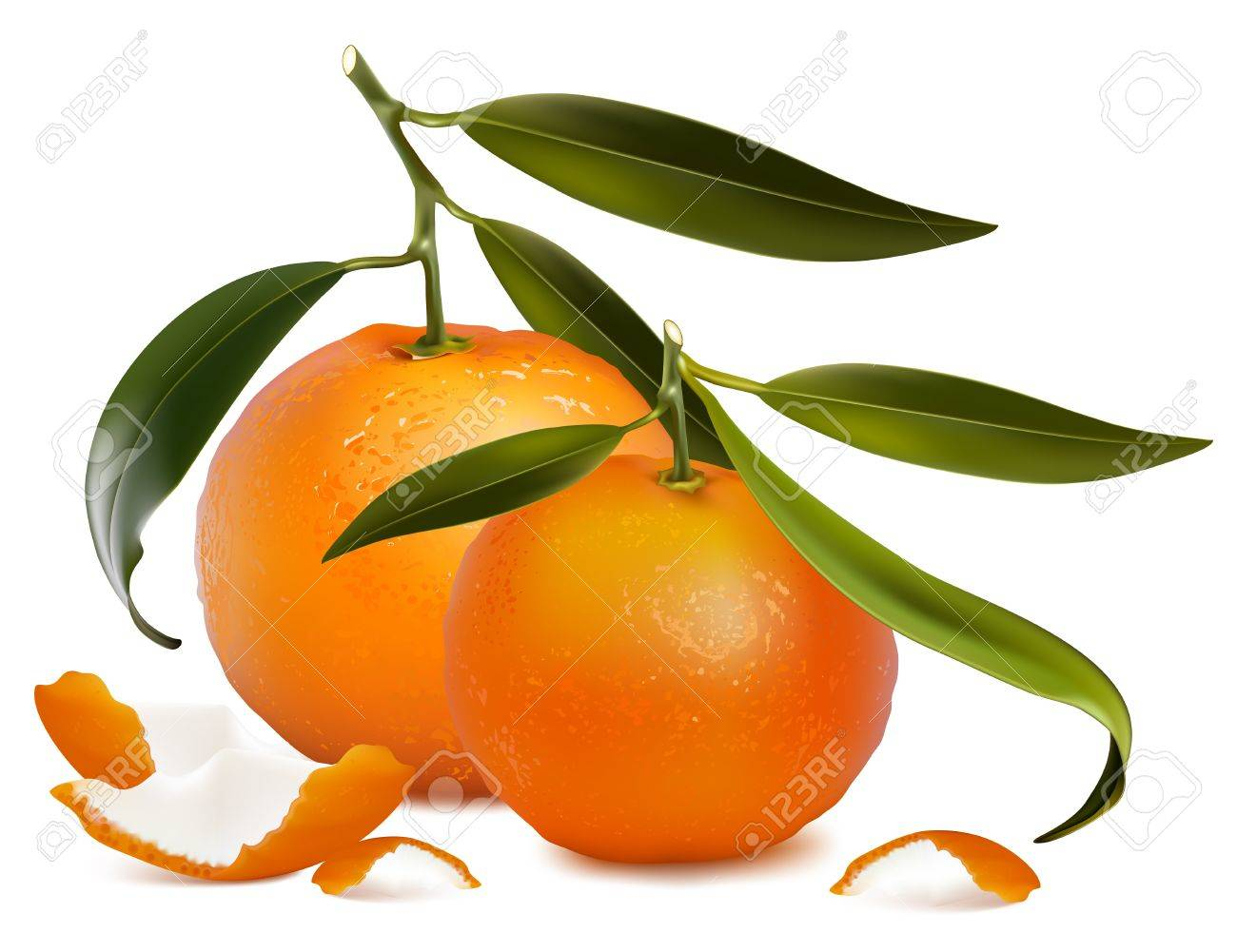 Photo-realistic vector. Fresh tangerine fruits with green leaves and tangerine peel. - 10053521