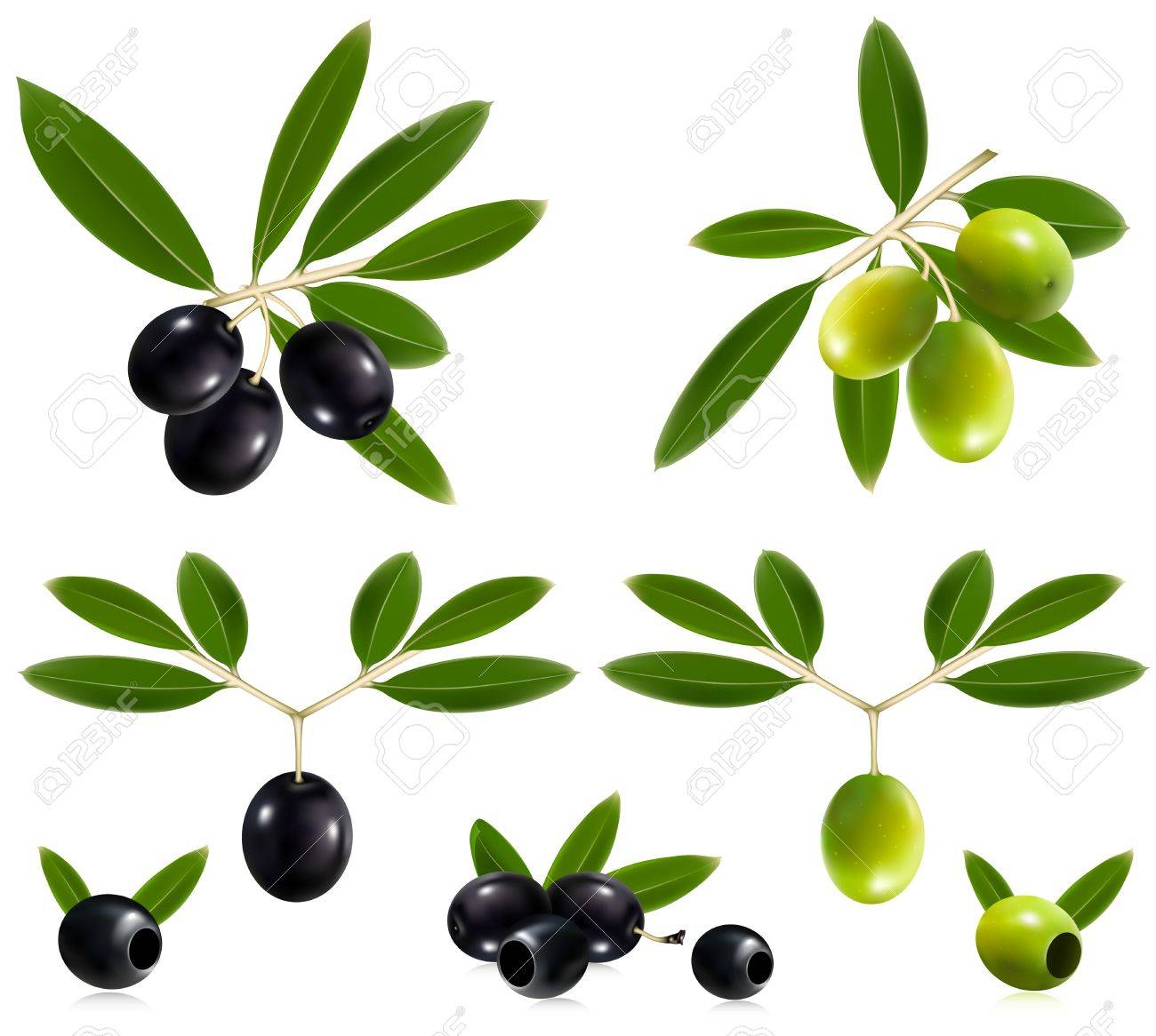 Photorealistic vector illustration. Green  and black olives with leaves. Stock Vector - 10053528