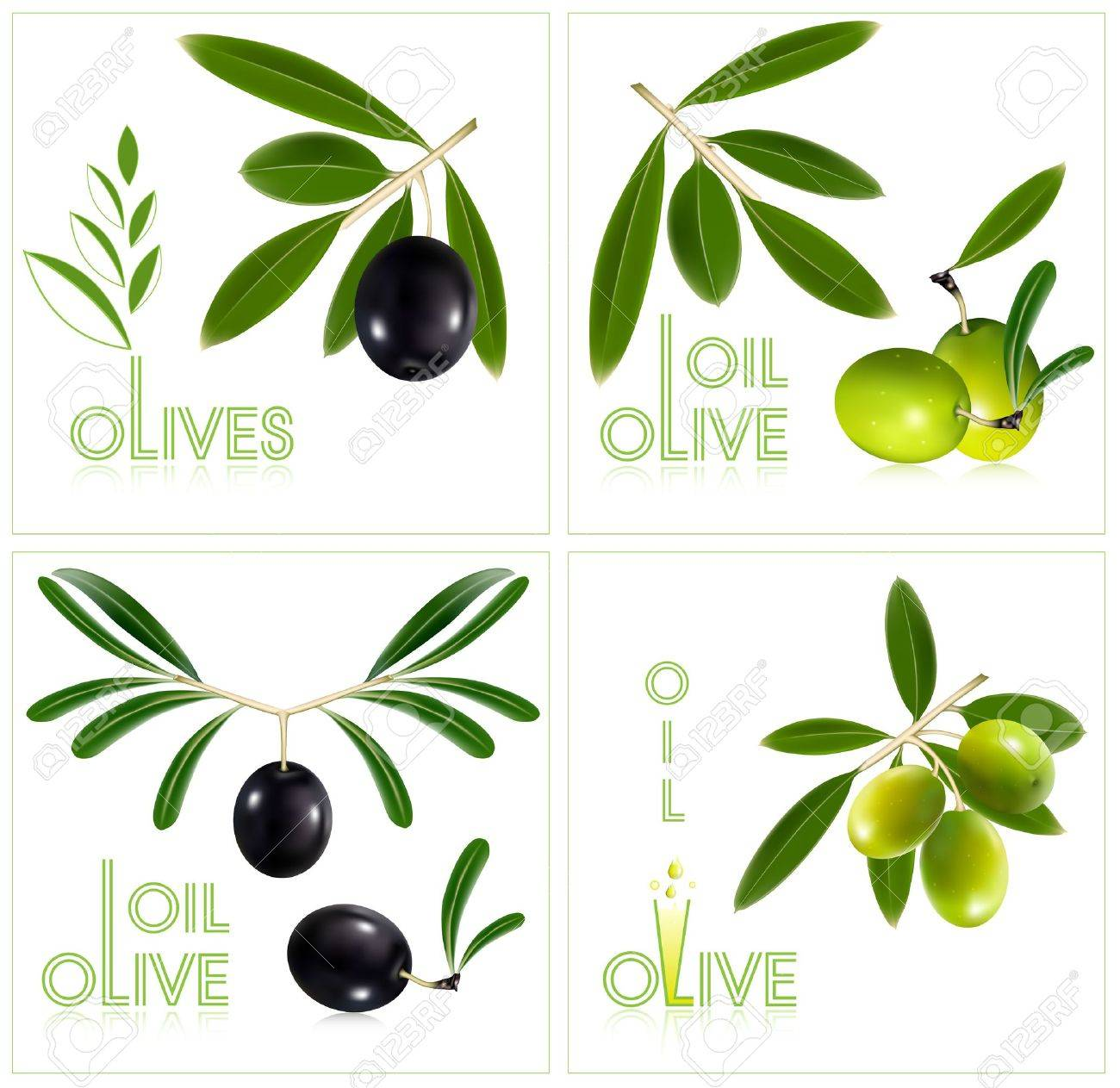 Photorealistic vector illustration. Green olives with leaves. Stock Vector - 10053372