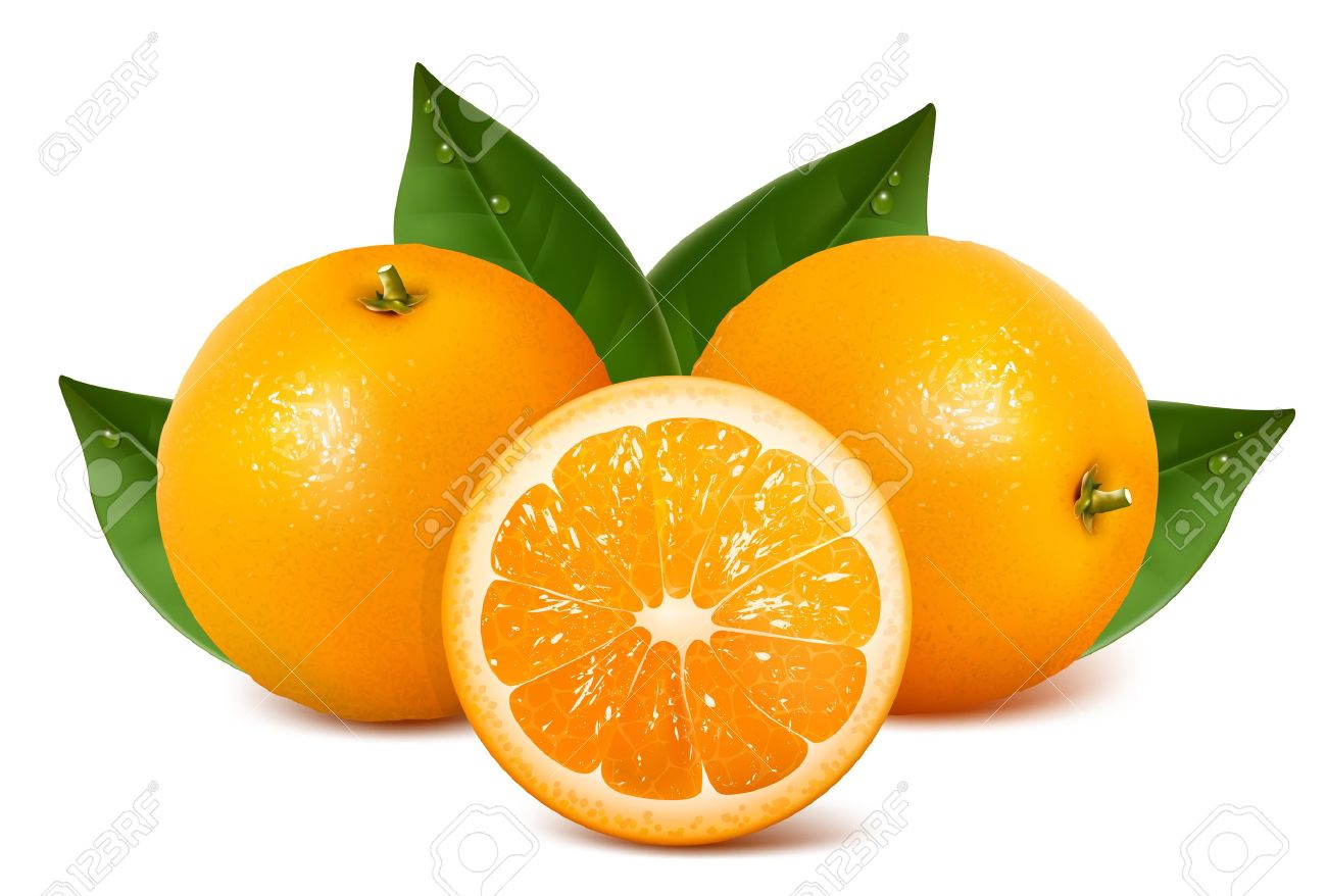 Orange Fruit Vector Vector fresh ripe oranges with