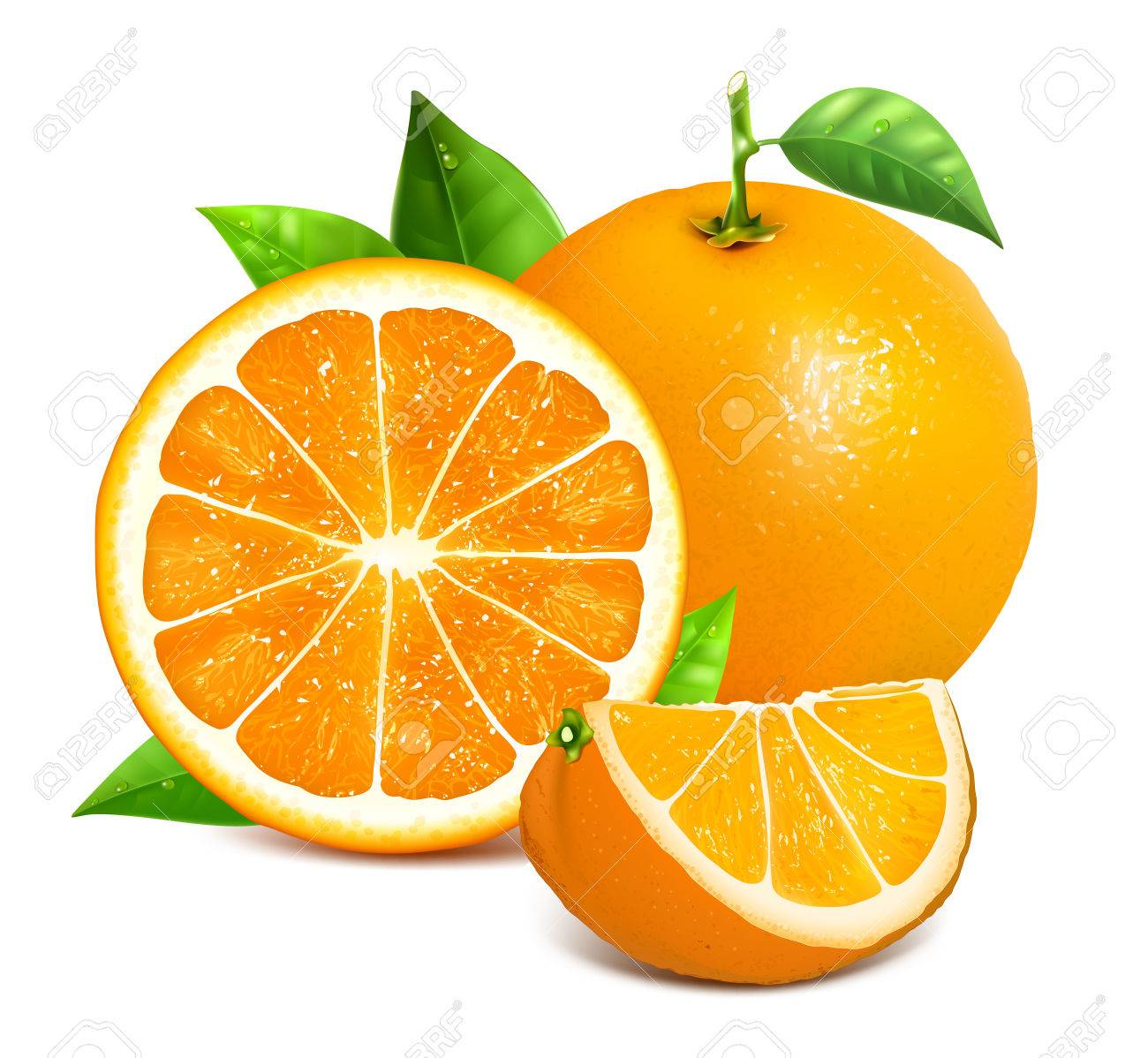 Orange whole and slices of oranges  Vector illustration of oranges