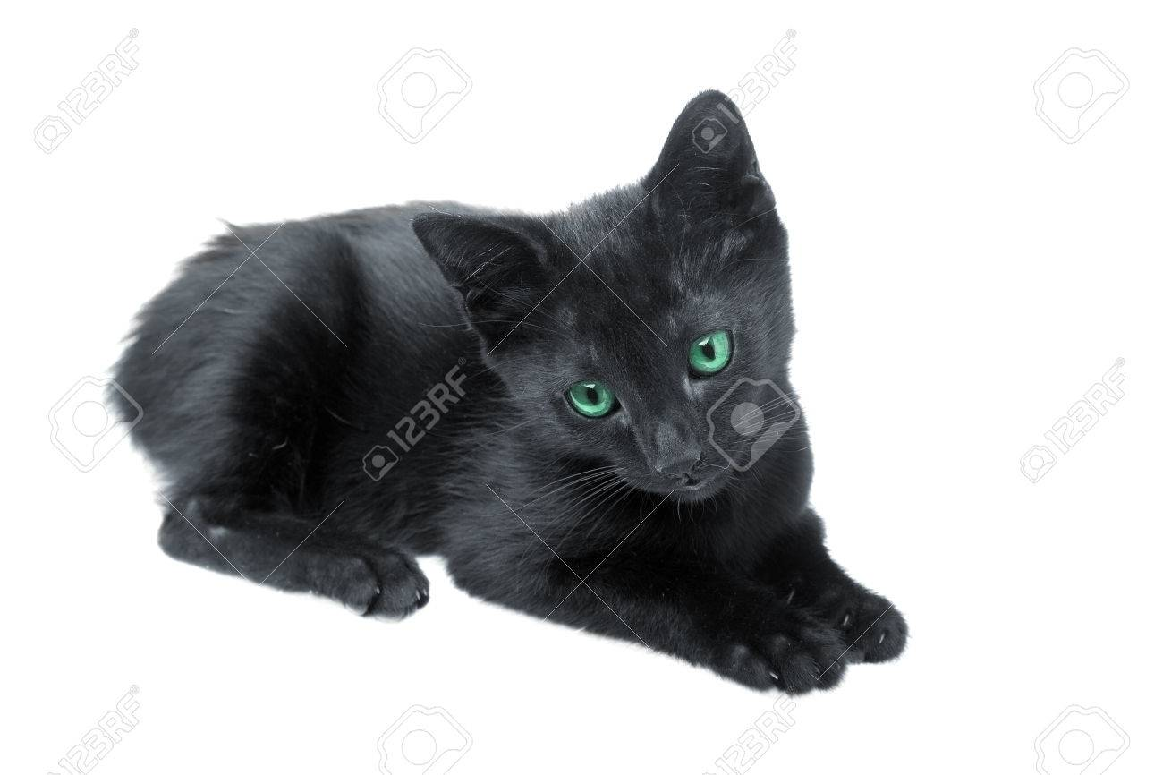 Cute Black Kitten With Green Eyes On White Background Stock Photo