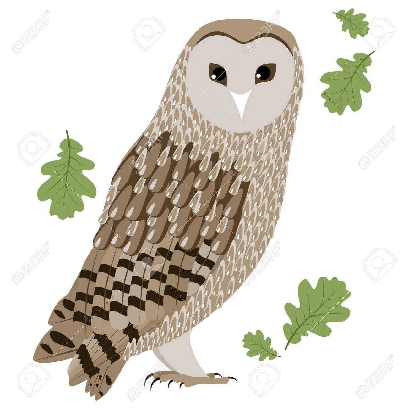 納屋フクロウのイラストメンフクロウは白い背景で隔離納屋フクロウの図