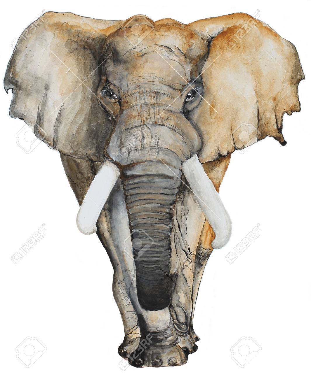 Watercolor Elephant On White Background For Brochure And T Shirt Stock Photo Picture And Royalty Free Image Image 57236449