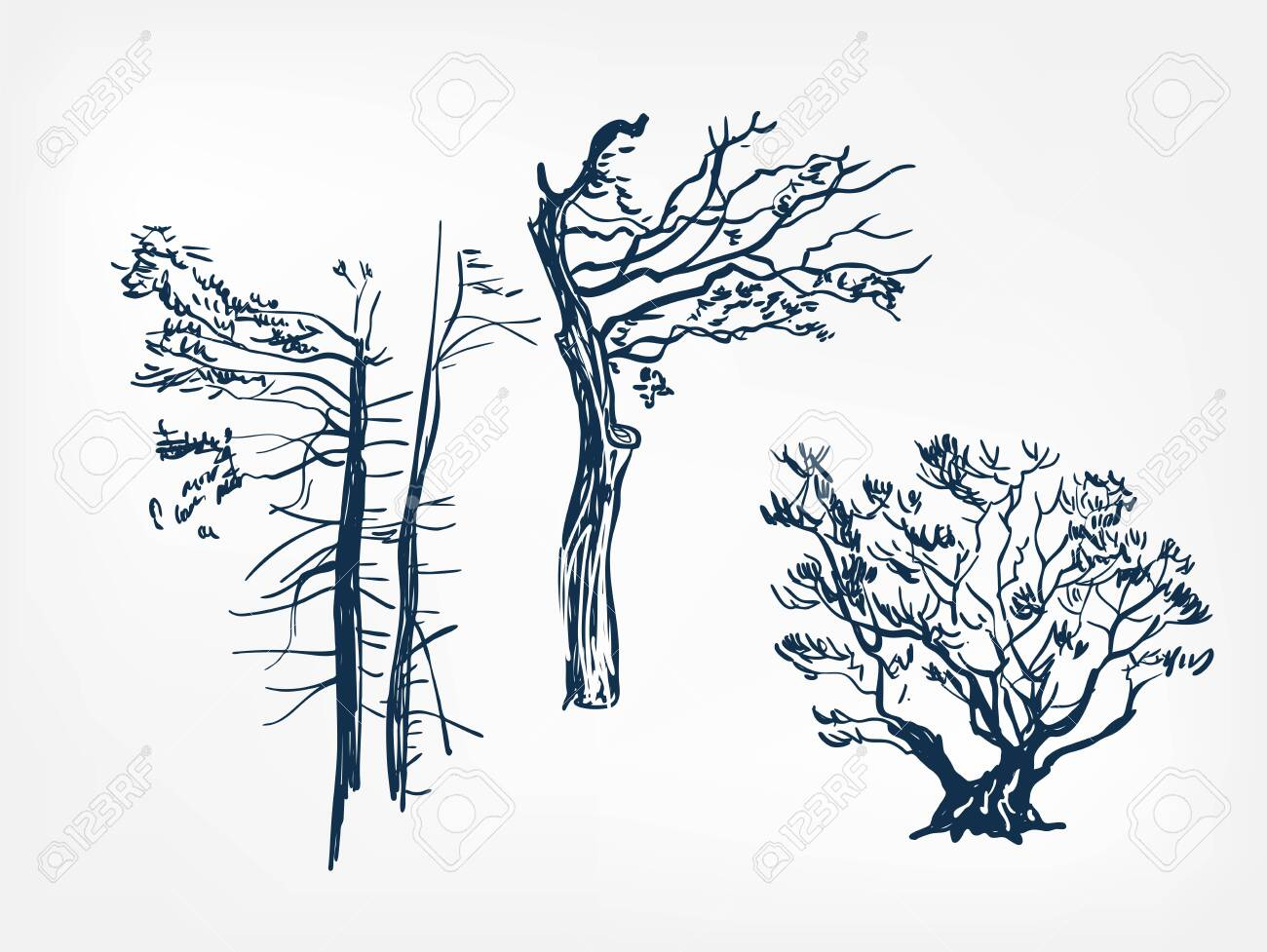 Old Tree Set Design Elements Vector Sketch Illustration Japanese Royalty Free Cliparts Vectors And Stock Illustration Image 142201632
