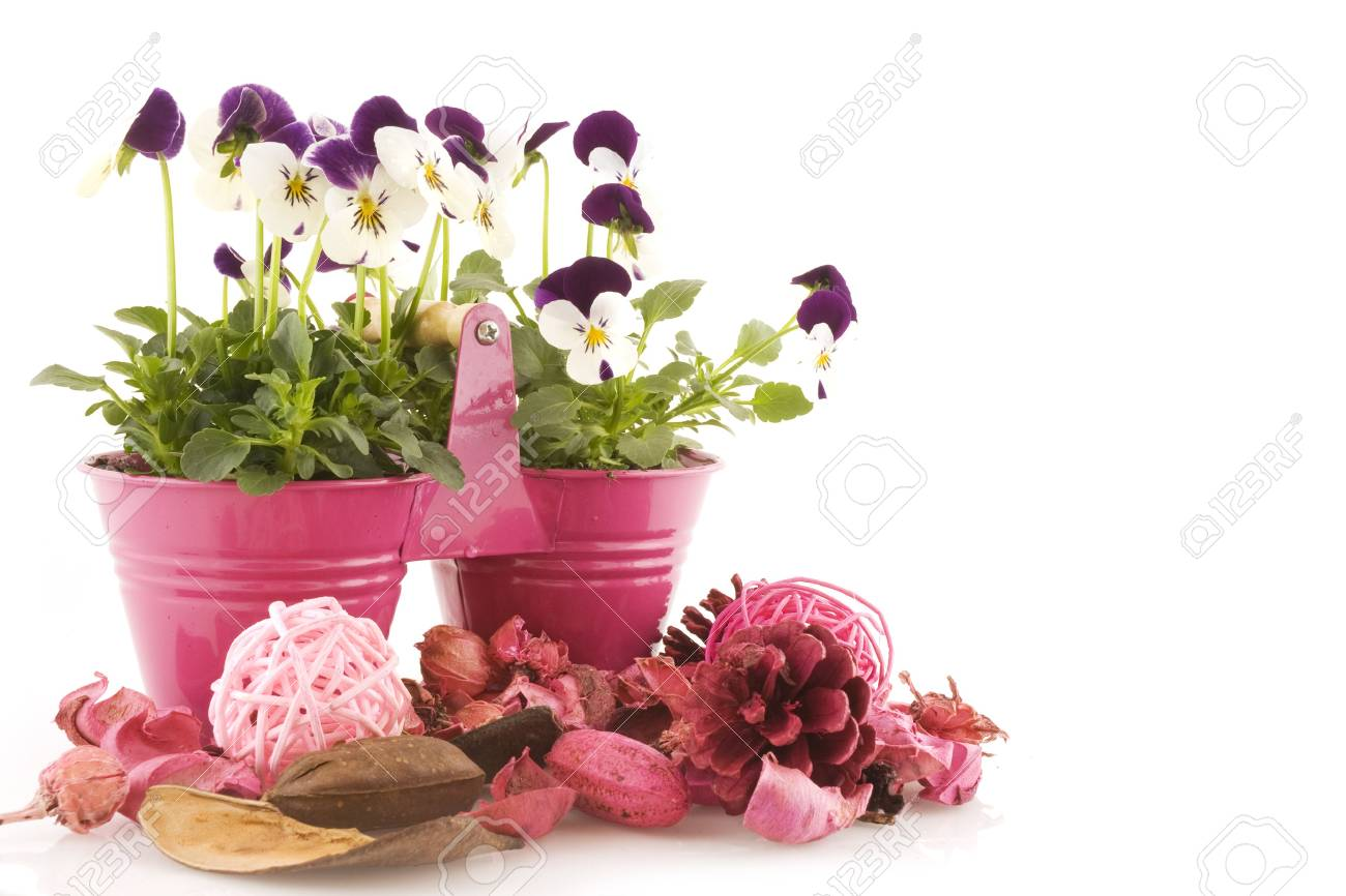 pink decoration in springtime Stock Photo - 2940375