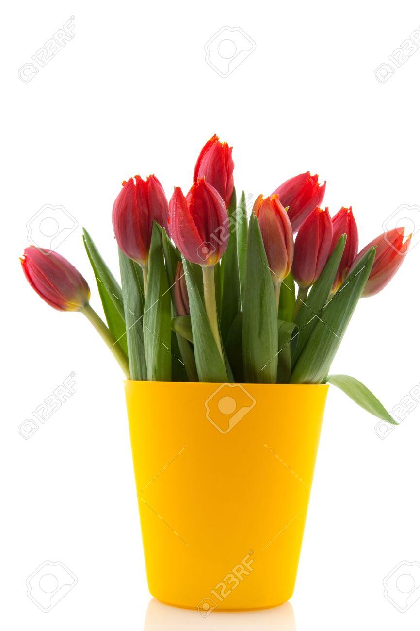 Bouquet tulips in modern yellow flower pot stock photo picture and bouquet tulips in modern yellow flower pot mightylinksfo