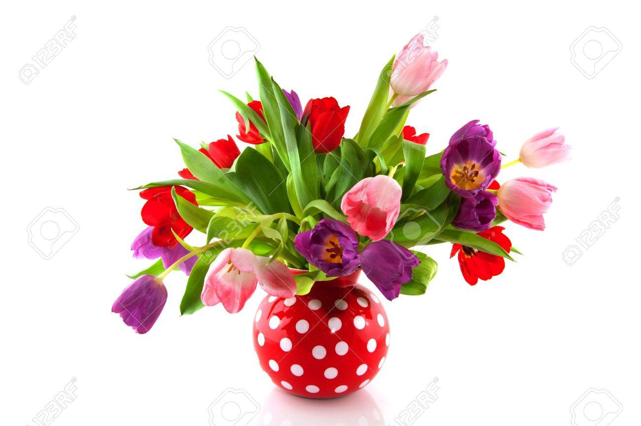 Colorful tulips in red speckles vase isolated over white stock colorful tulips in red speckles vase isolated over white stock photo 6170928 reviewsmspy