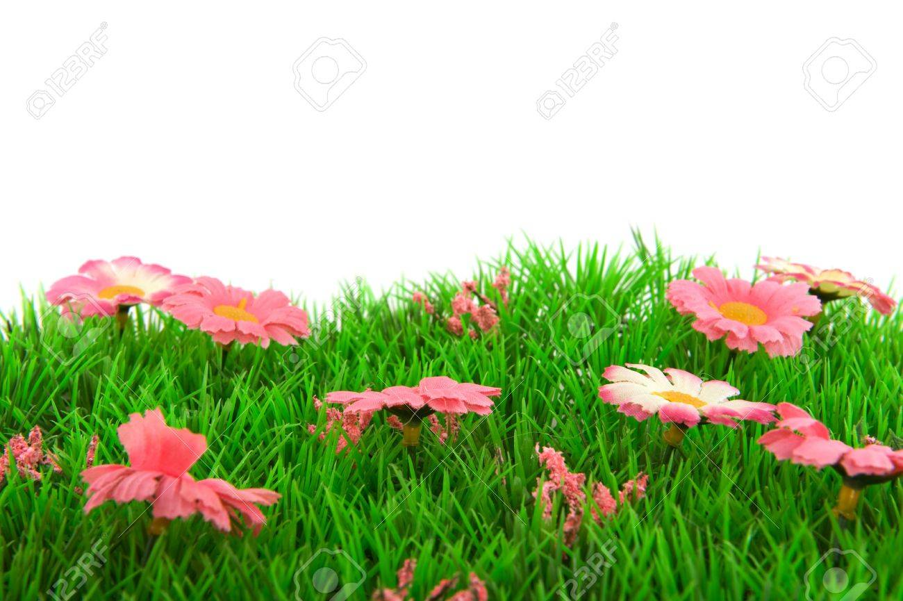 Green grass with pink flowers and white background stock photo green grass with pink flowers and white background stock photo 6950597 mightylinksfo