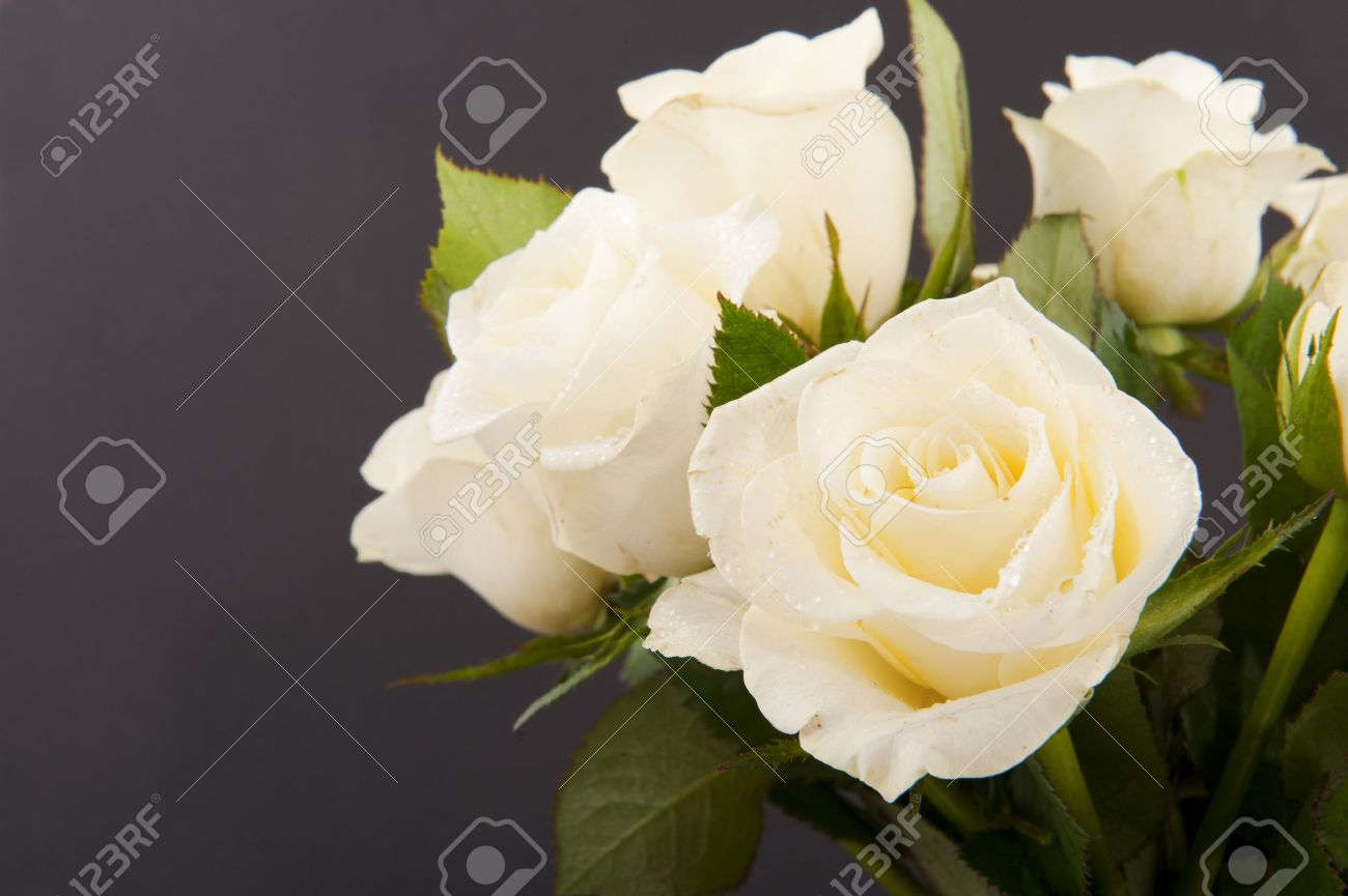 Vase white roses for a funeral isolated on black stock photo vase white roses for a funeral isolated on black stock photo 7031181 reviewsmspy