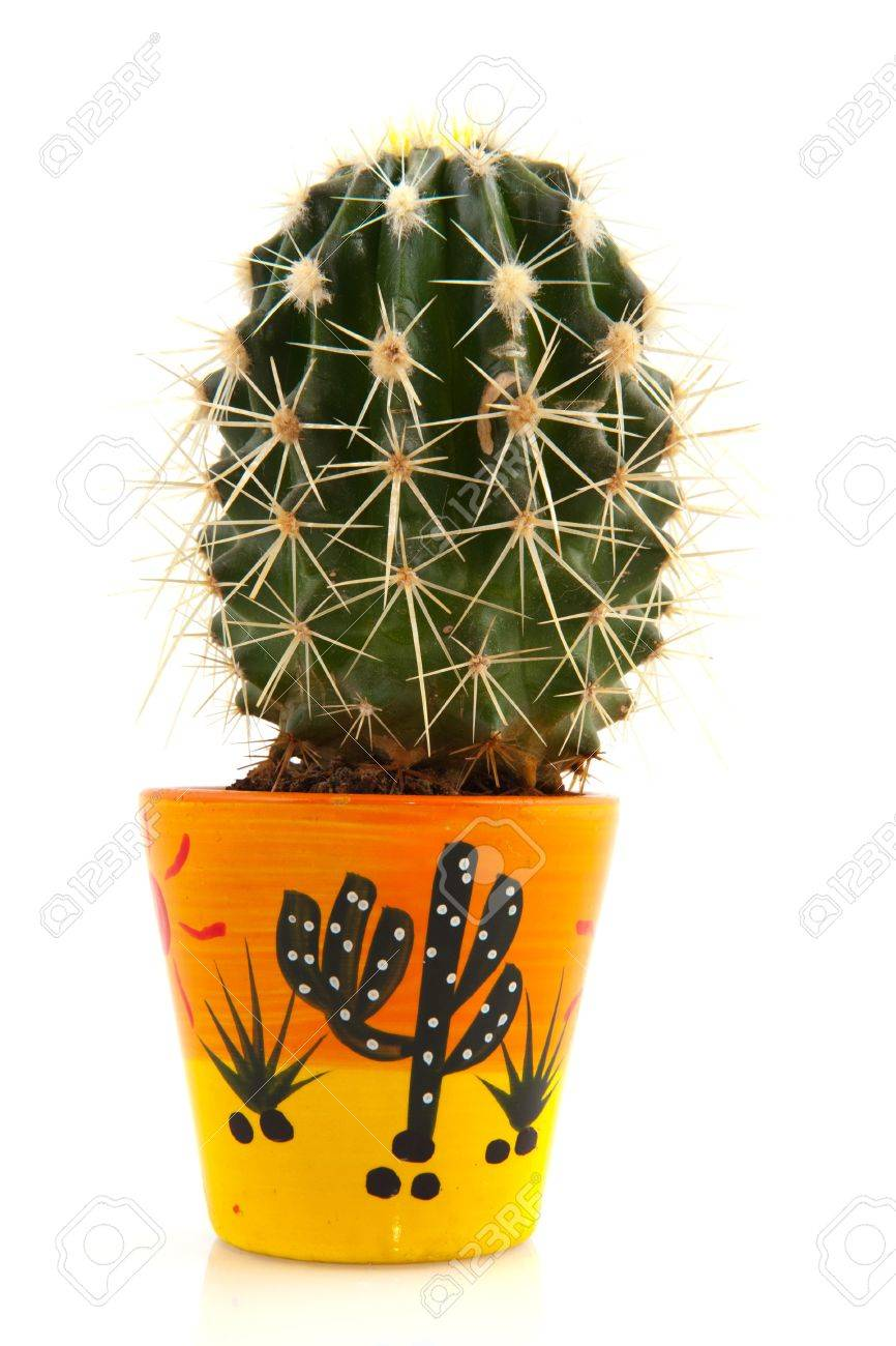 Prickly cactus in decorated flower pot isolated over white Stock Photo - 7638260