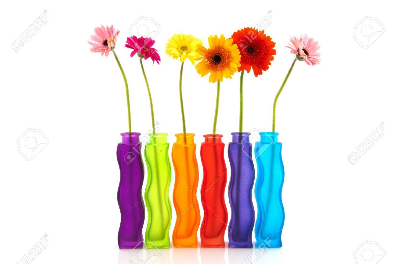 Modern Glass Vases Colorful Single Gerber Flowers In Row Modern Glass Vases Stock