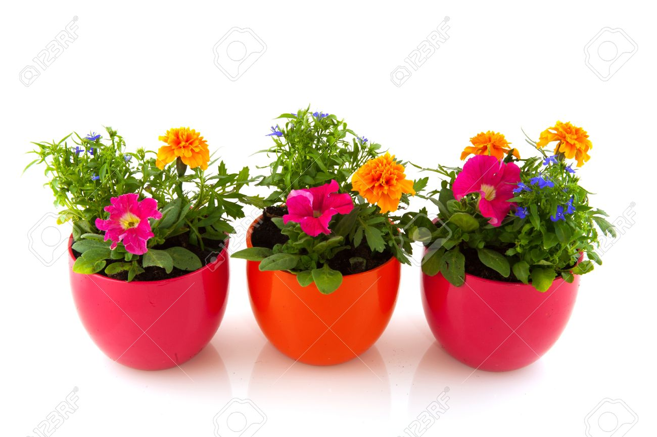 Garden Flowers And Plants In Colorful Pots Isolated Over White Stock ...