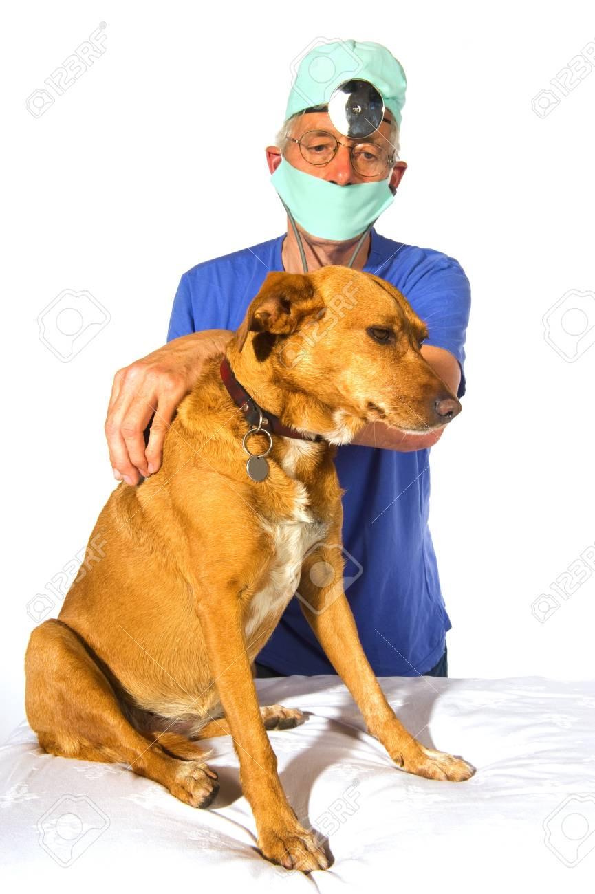 Chien pour un examen par la veterinair Banque d'images - 8056485