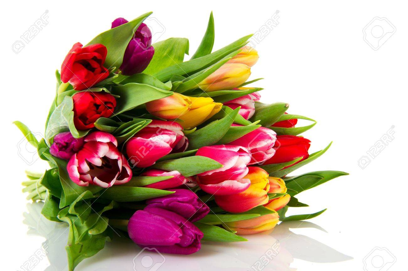 Various colored Dutch tulips isolated on white background Stock Photo - 8676982
